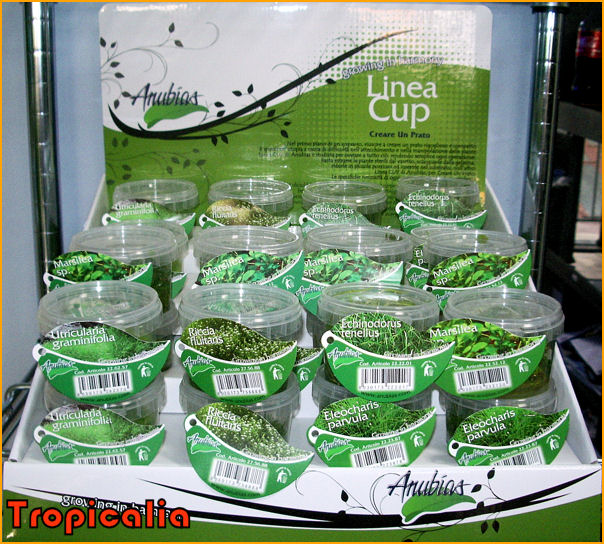 Linea Cup
