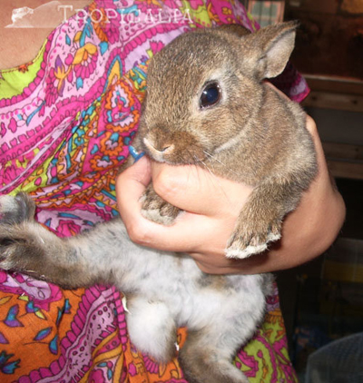 Altri piccoli amici tropicalia - Lettiera coniglio nano ...