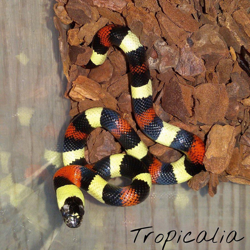Tropicalia pagina 6 for Acquari nuovi in offerta